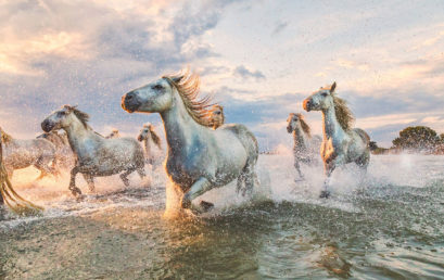 The White Horses of the Camargue – Southern France with Scott Stulberg (Travel Workshop)