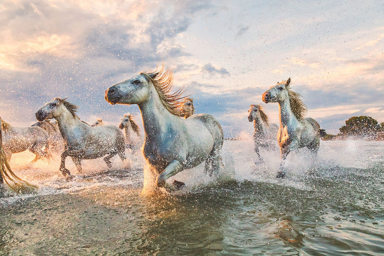 The White Horses Of The Camargue Southern France With Scott Stulberg Travel Workshop The Los Angeles Center Of Photography
